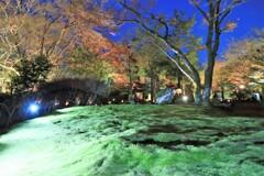 宝厳院 冬のライトアップ