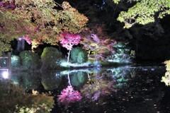 京都府立植物園 紅葉 ライトアップ
