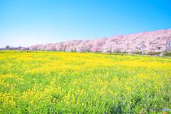 春の花に癒されよう♪