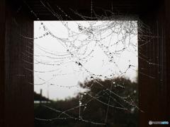 蜘蛛の巣と露