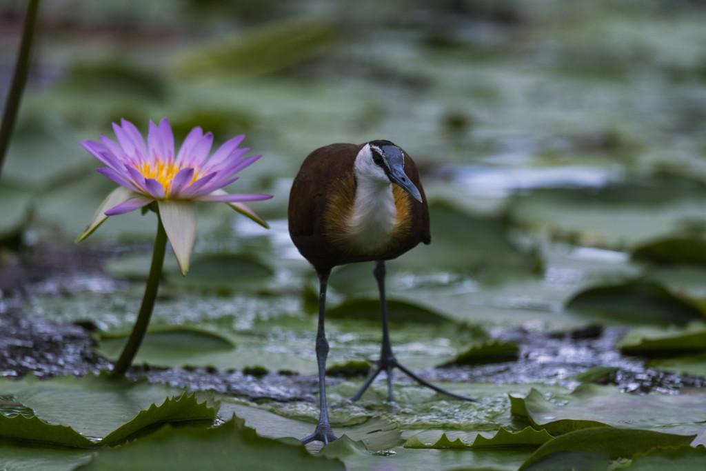 掛川花鳥園のスター達