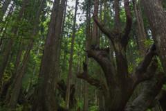 逃げる株杉