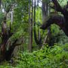 株杉の森の闘い