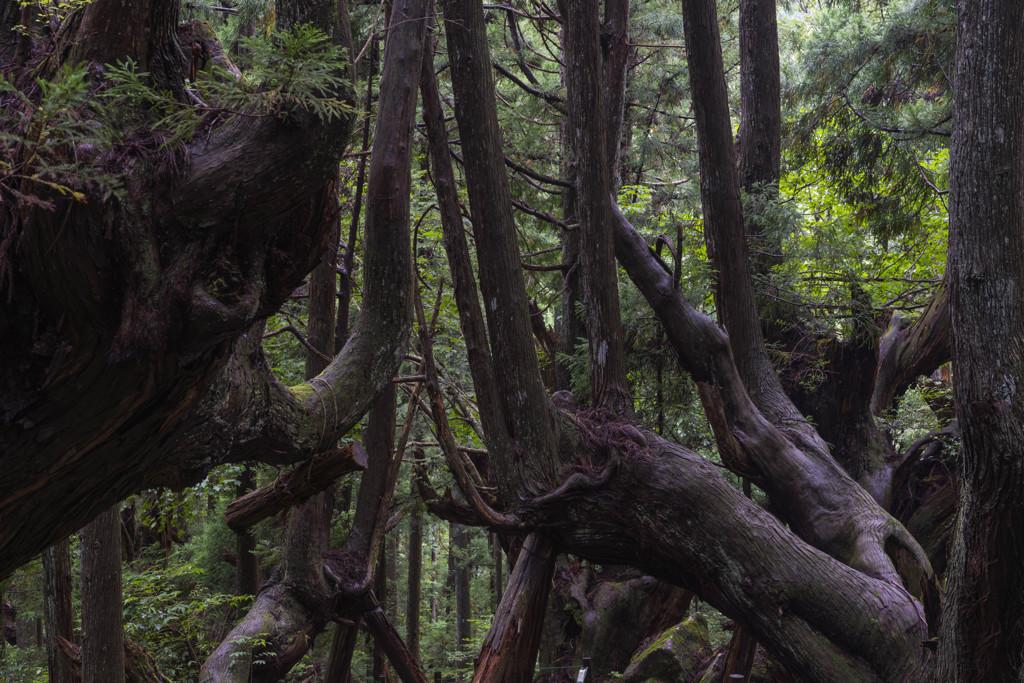 株杉の森 スクランブル交差点