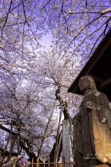 お地蔵さんと蒲桜
