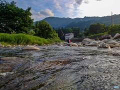 魚野川の夏2