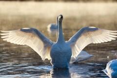翼を広げて