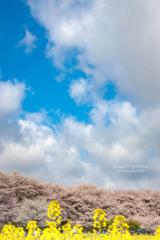 権現堂の青い空