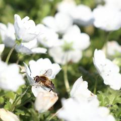 花粉まみれて