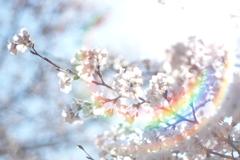 フレアと桜