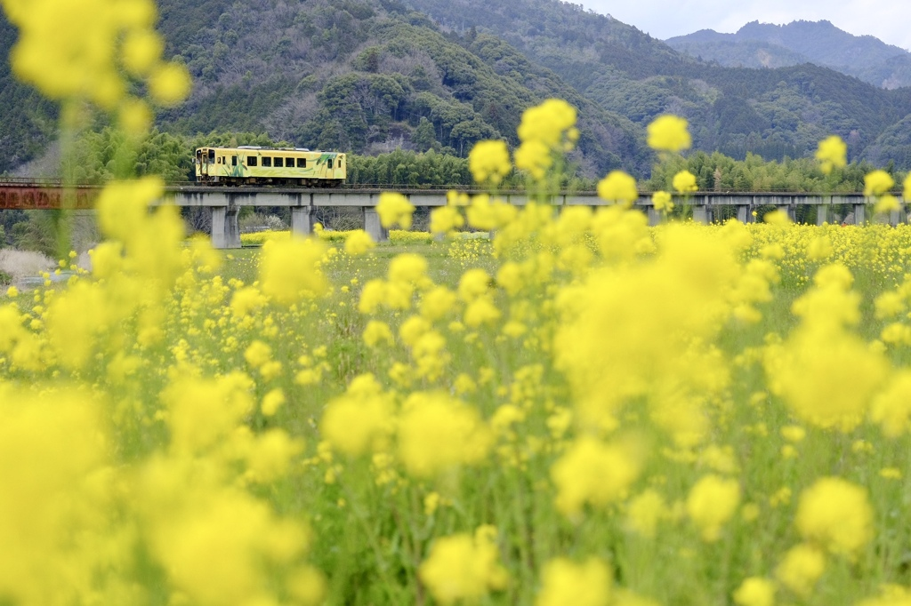 錦川清流線の春
