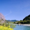 清流錦川の春