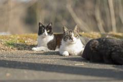 仲良し野良猫たち