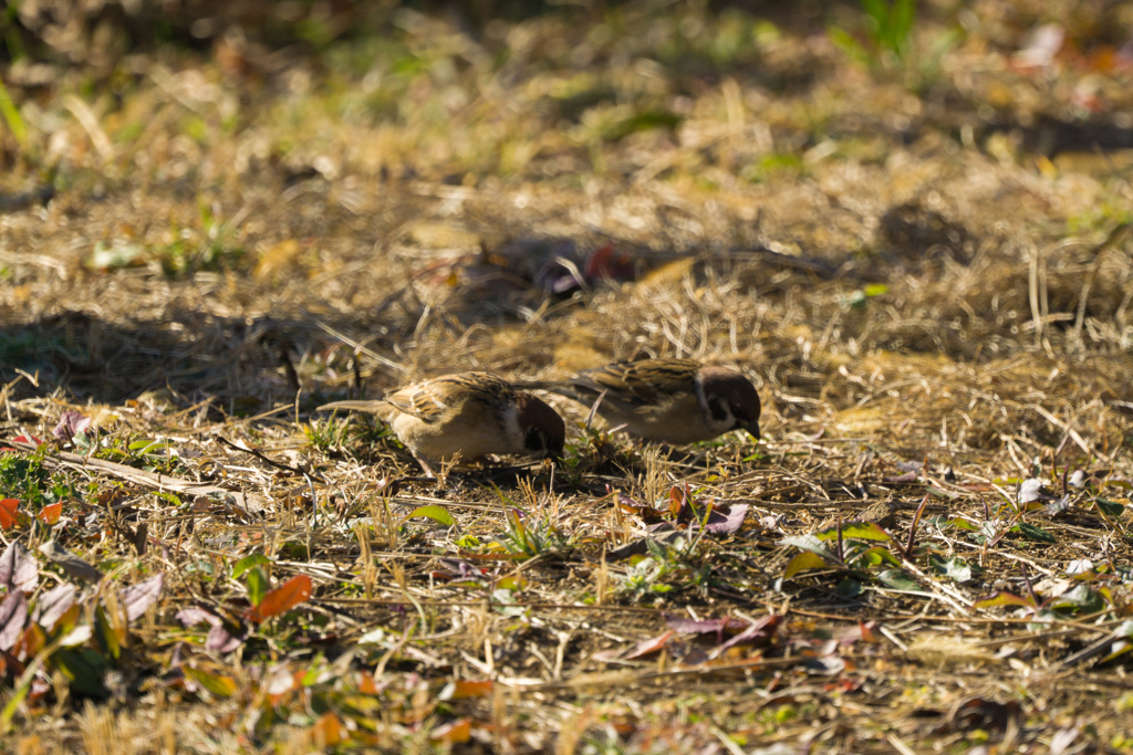 葛西 臨海 公園 野鳥