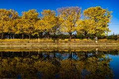 昭和記念公園4カナール