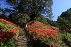 秋の仏隆寺 1