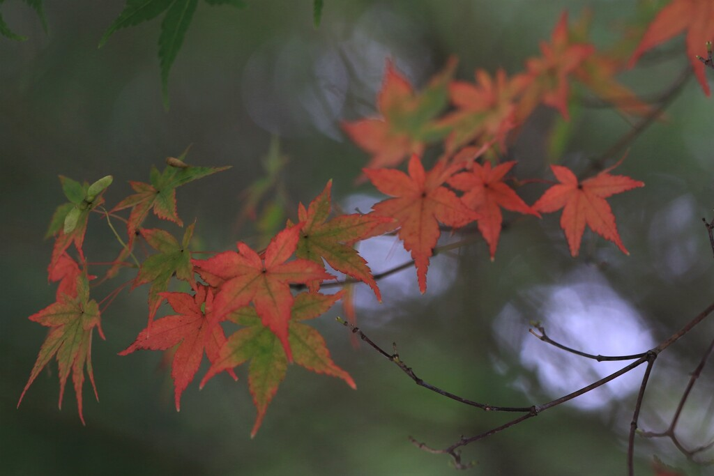 秋の気配 2