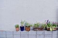 植木鉢の並びは、ちょっとしたこだわり