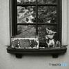 シリーズ 嫁の激写 「 窓の置物。かわいい 」