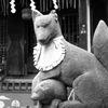 三河島のお狐様