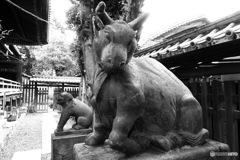 牛嶋神社 狛牛①