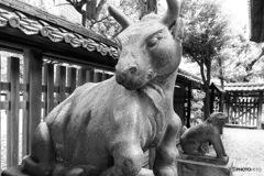 牛嶋神社 狛牛②