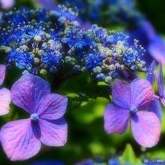 紫色の煌めき