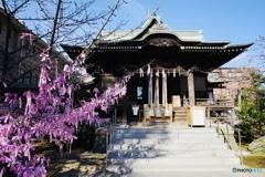 河津桜で縁結び祈願