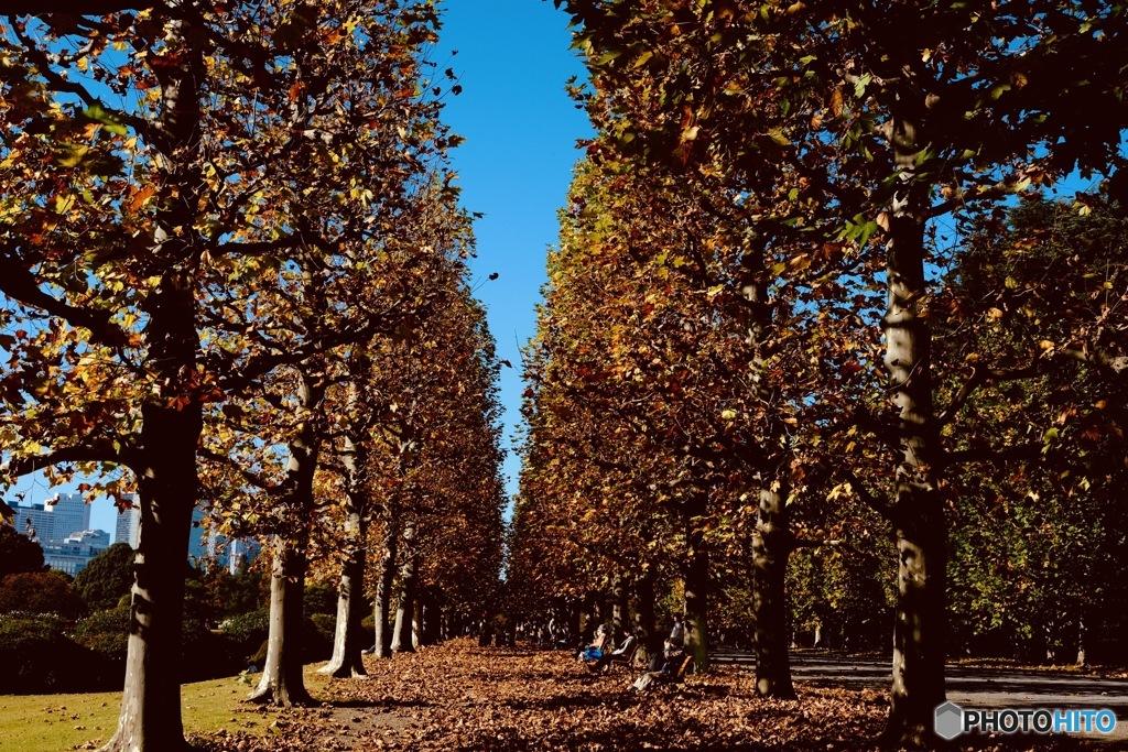 晩秋の並木路