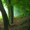 霧に包まれる森
