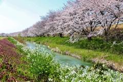 春を 撮る ♪