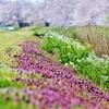 春を撮る ♪