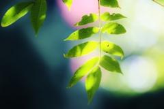 緑の葉っぱが ゆらぐ時 ✨