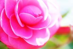 花も嵐も ふみこえて・・・