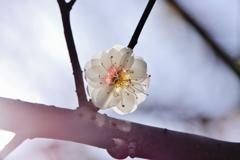 春よ こい