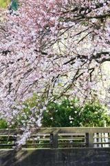 光のどけき 春の日に・・