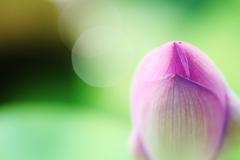 明日 咲く花