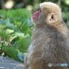 道路脇にお猿さんDSC03730