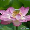 花はすDSC06131