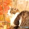秋色の猫IMG_1236