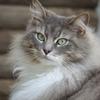 毛並みのいい猫(御誕生寺)DSC04846