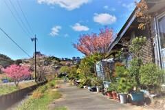町は、春日和にて候。9