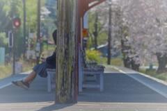 春うらら4