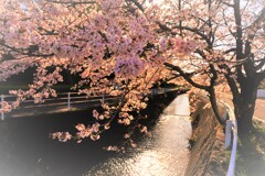 町は、春日和にて候。10