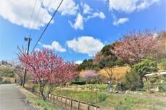 町は、春日和にて候。7