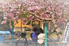 町は、春日和にて候。14