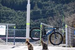 町猫物語2