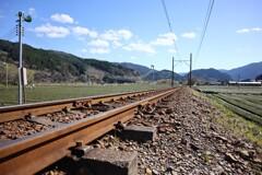 茶畑と線路