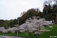 桜並木と南海