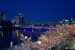 天満橋の桜